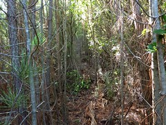 La tranchée démaquisée dans le 1er bois de pins après la sente de chasseurs