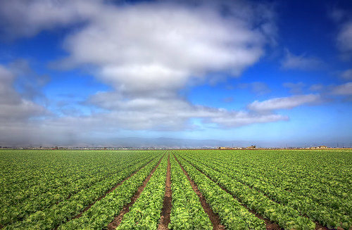 Crops and Clouds by Dave Toussaint on Flickr The Commons