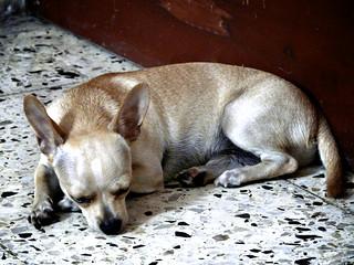 Nano resting.