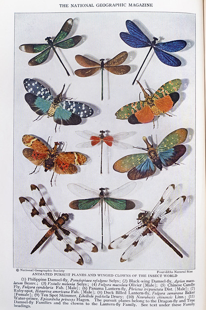 Plate VIII - Insect Rivals of the Rainbow