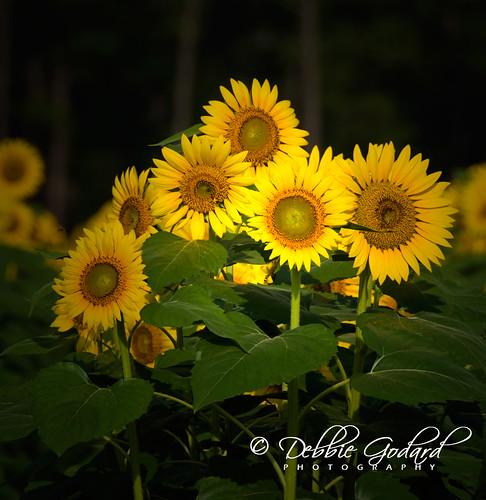 flowers landscape al nikon daphne beautifulearth nikond90 artofimages debbiegodard
