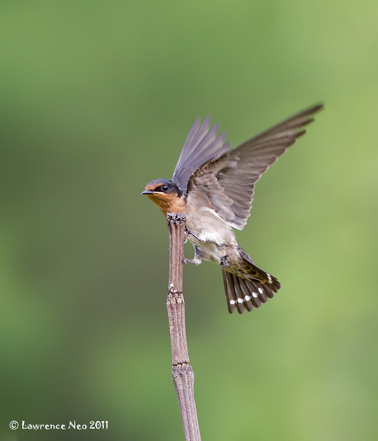 Bird photography inspiration by Lawrence Neo