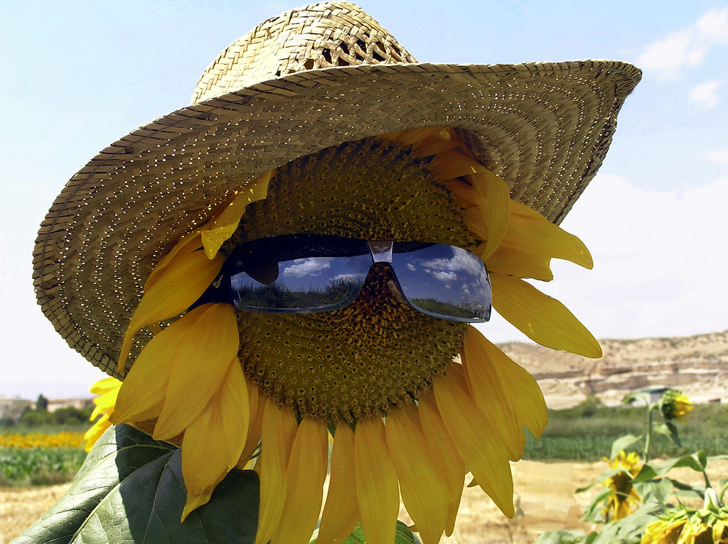 麦わら帽子とサングラスをかけたひまわり
