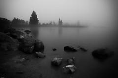 B&W & fog