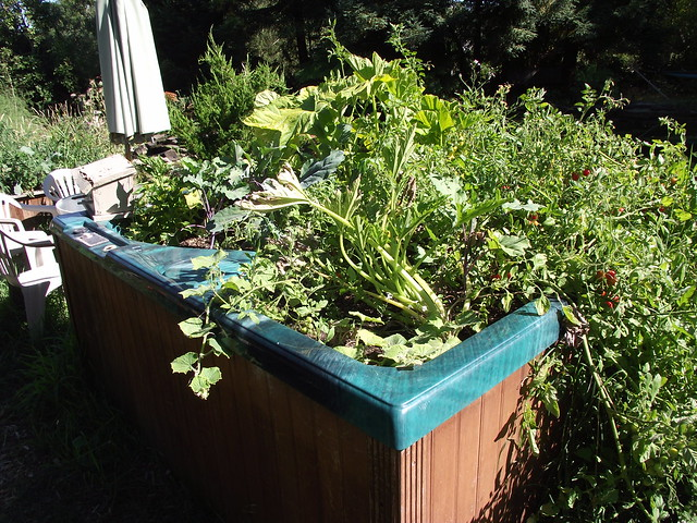 Hot Tub Recycled Into A Planter Flickr Photo Sharing