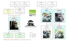 Gorilla Family - Seattle - Group 2