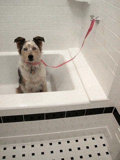 Who knew Kohler made doggy-bath tie-downs?