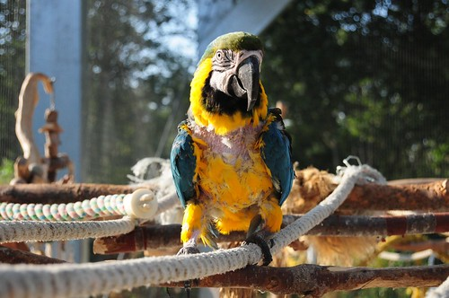 How One Person Stopped Her African Grey Parrots Feather Plucking