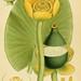 Billeder af nordens flora v.1