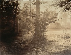 Tree Study, Forest of Fontainebleau, 1856, by Gustave Le Gray