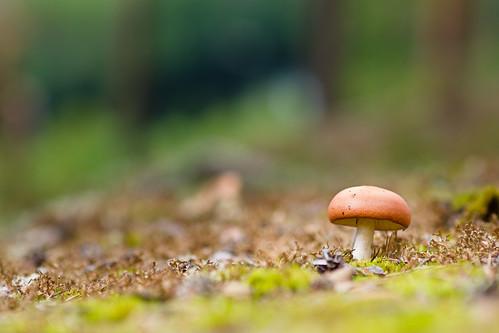 summer mushroom finland landscape sony 85mm jyväskylä jyvaskyla kesä luonto sieni a500 samyang hyyppää