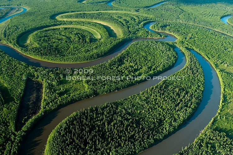boreal-oxbow-forest-summer-riv-DAN9800-copy