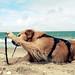 Hund am Ellenbogen