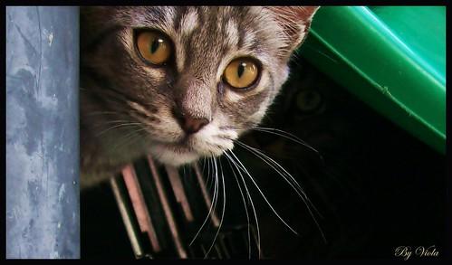 Esporotricose felina - PetLove