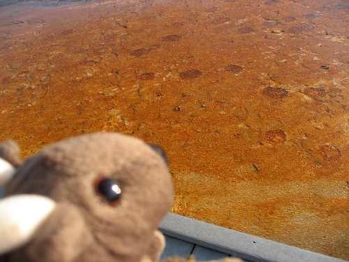 Buddy Bison sees bison tracks in the water next to the Grand Prismatic Spring...he didn't step off the boardwalks, he swears!