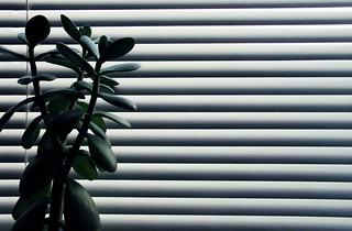 (254/365) Grey day