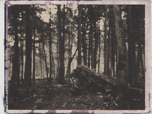 trees rock landscape polaroid woods bokeh maine unfocused cholcolate 250landcamera
