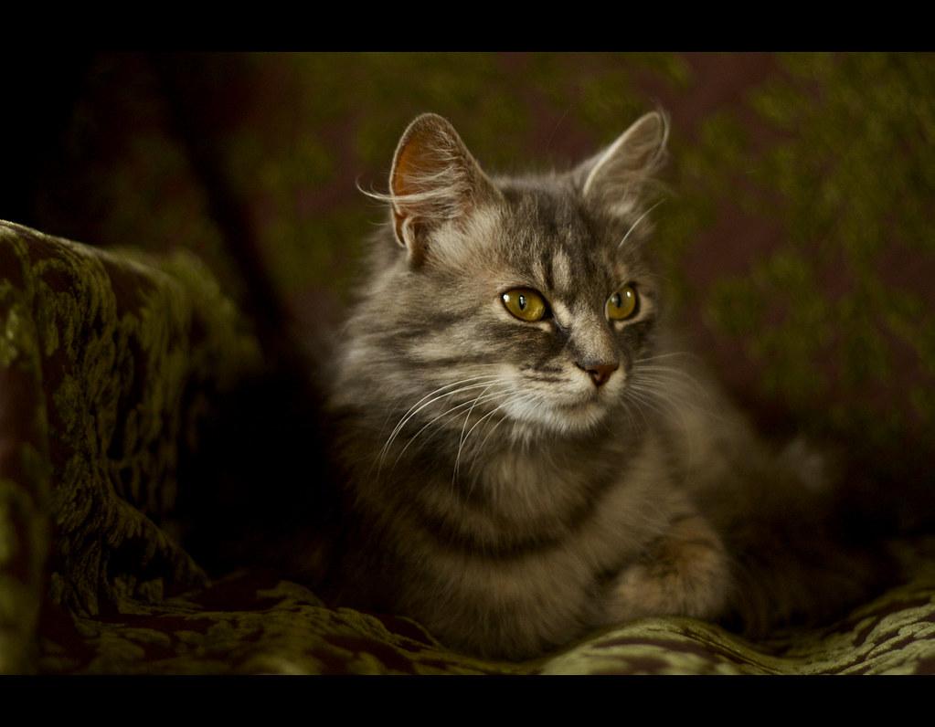 le chat dans le canapé
