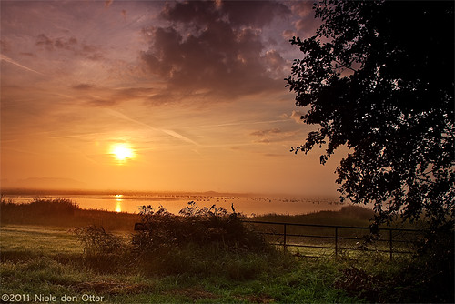 morning nature netherlands birds sunrise early geese pond goose binnenpoldervanterheijden