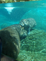 Hippo Hug 8390