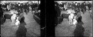 Champ de foire, moutons, Foix, mars 1903