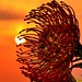 Sun Catcher by GerhardStimie