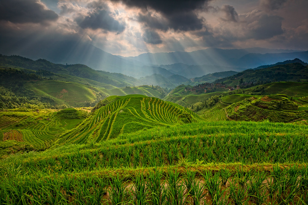 Amazing Longji rice terrace