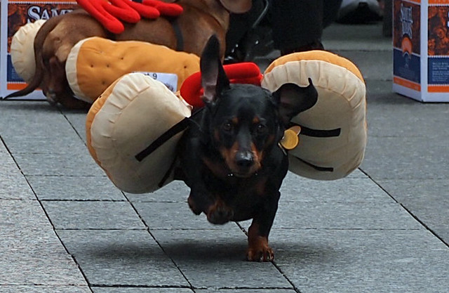 Running Of The Wieners (12)