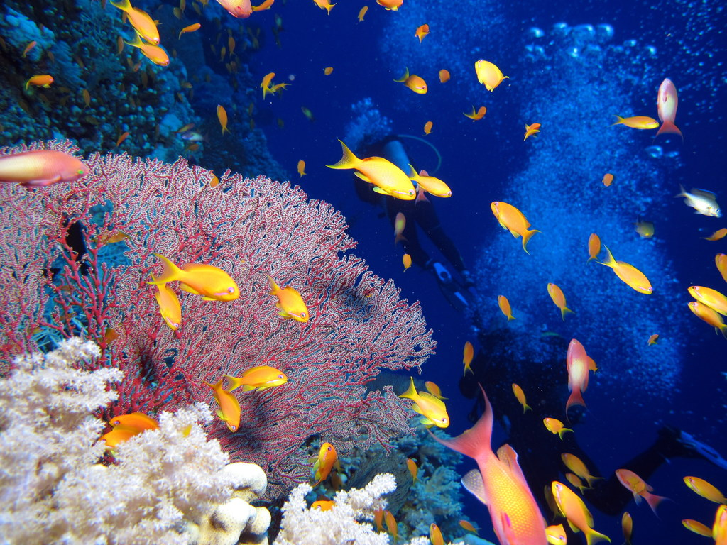 Divers, reef and fish at Little Brother, Red Sea, Egypt