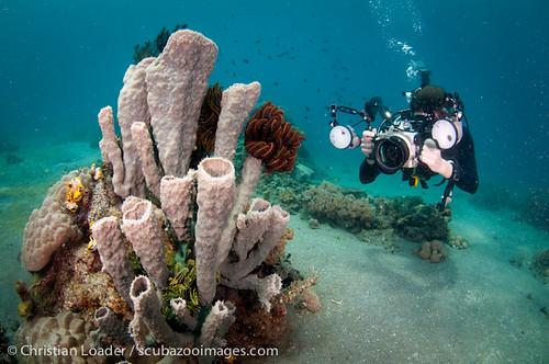diver & tube sponge - Lembeh-1