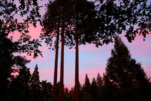 california wood trees sunset mountain mountains tree forest hotel inn woods rooms balcony room rustic sierra elegant suite suites narrowgauge sierranationalforest fishcamp route41 narrowgaugeinn