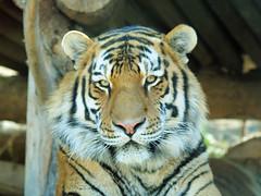 Izzy Zoo 2011 126