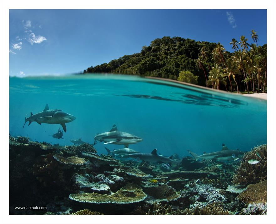 Paradise island? Look deeper!