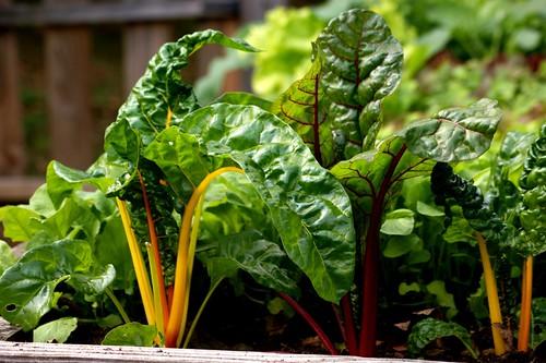Beautiful leafy vegetables