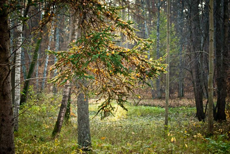 un bosque magico! DSC_9050