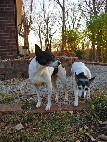 2011-11-11 - Dogs Outside - 0012