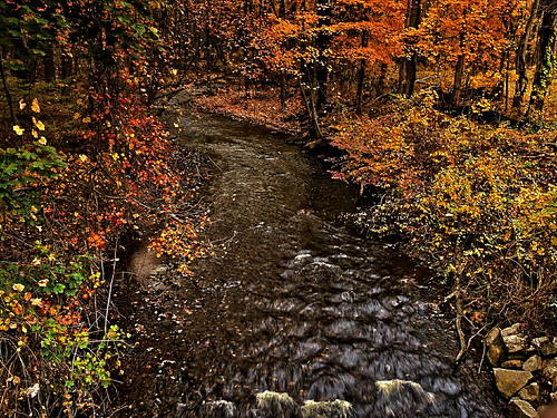 fallcolors lumixcamera panasonicdmcg1 pjddigipic autumncolorsstreambrookflowingglastonburyctwoods
