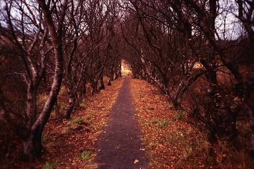 Mosfellsbær/We took a walk