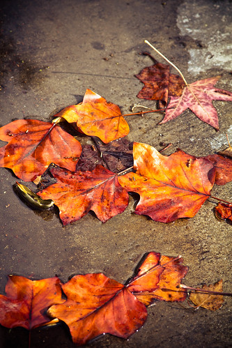 Fall Leaves by the curb