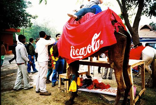 Coca-Cola branded camel