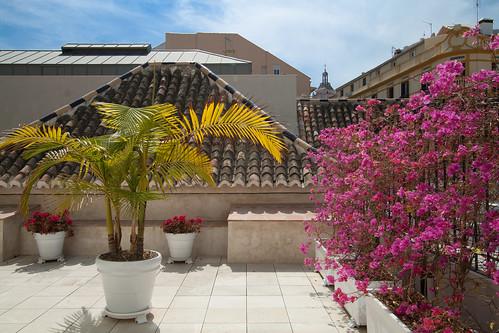 Terraza del Museo Carmen Thyssen