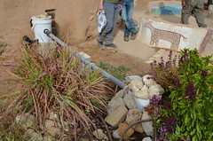 公共廚房排出的廢水,利用塑料桶及水管搭接灌溉