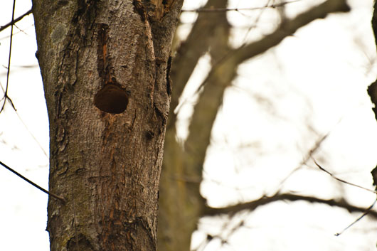 woodpecker home