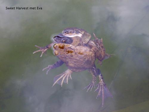 Eva's Garden Frogs