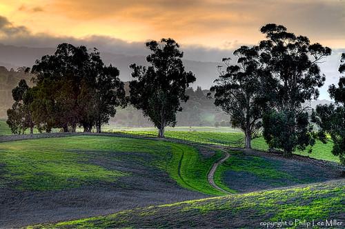 california nature grass landscape trails hdr rollinghills arastraderopreserve eucalyptustrees d7000 topazdetail rememberthatmomentlevel4 rememberthatmomentlevel1 rememberthatmomentlevel2 rememberthatmomentlevel3 rememberthatmomentlevel7 rememberthatmomentlevel5 rememberthatmomentlevel6