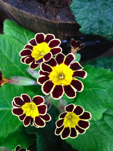 Flowery Loveliness