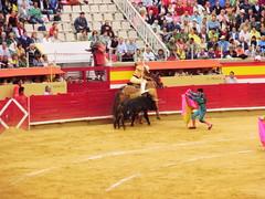 animal sports, bull, sport venue, tradition, sports, bullring, entertainment, matador, bullfighting,