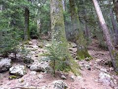 Sentier Fumicosa/Samulaghja : trace cairnée vers Punta Samulaghja (accès grimpe)