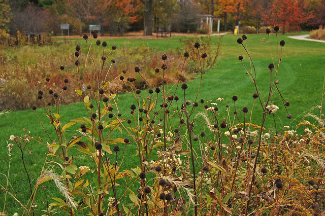 Wisconsin Native Plant Garden | Explore FarOutFlora's ...
