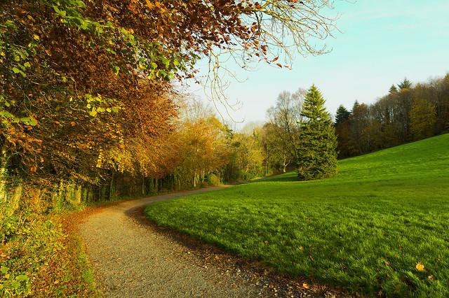 Dún na Rí Forest Park